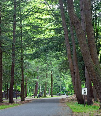 Portage Township, Cameron County, Pennsylvania - Road through conifers in Sizerville State Park
