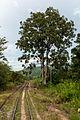 SabahStateRailways RailwayOperationInPadasRiverValley-09.jpg