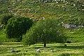 Salt Qasabah District, Jordan - panoramio (8).jpg