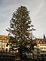 Sapin de la place Kléber, Strasbourg, France - panoramio - georama.jpg