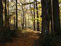 Schaumburger Wald 2015-10-31 - BA312892.jpg