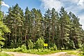Sciklieva reserve (Belarus, June 2020) 12.jpg