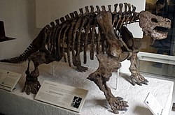 scutosaurus skeleton  Skeleton, American Museum...