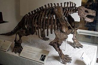 Scutosaurus - Skeleton, American Museum of Natural History