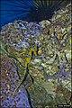 Sea-Horse-Jerusalem-Biblical-Zoo-IZE-263.jpg