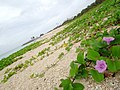 Seaside (6372729357).jpg