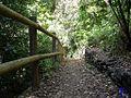 Sendero en Los Tilos 3 - panoramio.jpg
