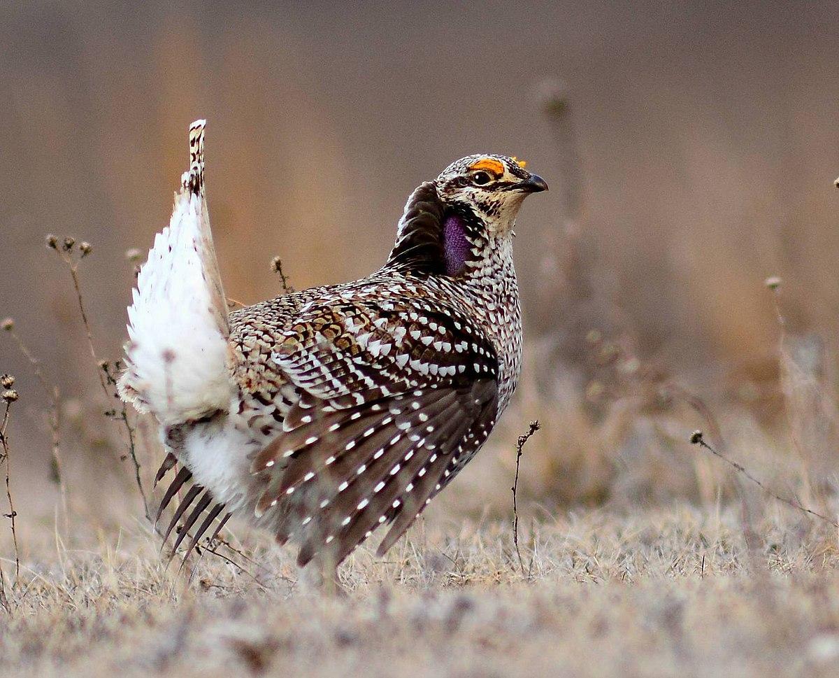 List of birds of Saskatchewan - Wikipedia