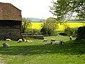 Sheep at Alciston - geograph.org.uk - 1264223.jpg