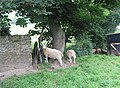 Sheep by the footpath - geograph.org.uk - 549343.jpg