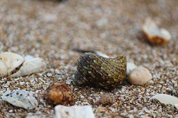 Shell at the sea shore.jpg