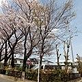 Shimohouya ed 01.jpg