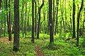 Short Hike (5) (20418135126).jpg