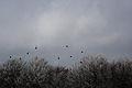 Shpendët në dimër.jpg