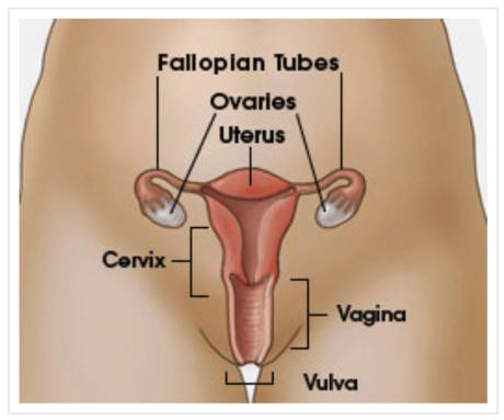 Vulva wiki Category:Human vulvas