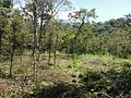 Sistema silvopastoril en cuenca alta del río Coapa, Pijijiapan, Chiapas 04.jpg