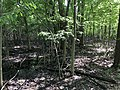 Slippery Elm Trail Black Swamp section.jpg