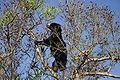 SlothBearTree.jpg