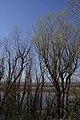 Smith & Bybee Lakes (13764800924).jpg