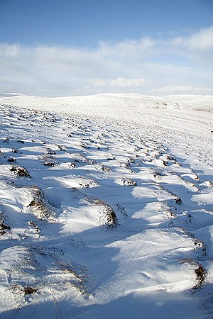 English: Snow-covered tussocks on Oxcleuch Rig...