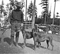 Soldier with two dogs named Jack and Jill, Fort Lawton, nd (KIEHL 355).jpeg