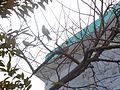 Sparrow0001.jpg