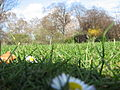 Spring in St. James Park - London (2329012949).jpg