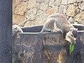 Sri Lanka Photo058.jpg