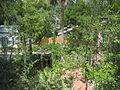StAugFLSept07Backyards.jpg