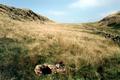 Stamm Ägypten – Trupp Penzberg – Großfahrt durch Großbritannien 1995 - Morgen am Hadrianswall.png