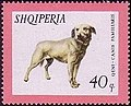 Stamp of Albania - 1966 - Colnect 197283 - Istrian Shorthaired Hound Canis lupus familiaris.jpeg