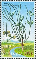 Stamp of Moldova md501.jpg