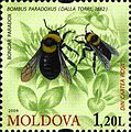 Stamps of Moldova, 019-09.jpg