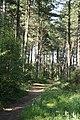 Stapleford Woods - geograph.org.uk - 1391401.jpg