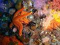 Starfish, brittle stars and urchins at 18m depth at SURG Pinnacles PB248807.JPG