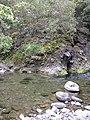 Starr-100430-5224-Erigeron karvinskianus-habit on streambank-Iao-Maui (24405176523).jpg