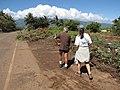 Starr-110312-3166-Thespesia populnea-tsunami damage debris on broken barricade with Kim and Mike-Kanaha Beach-Maui (25053059796).jpg