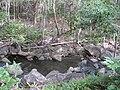 Starr-120229-9111-Syzygium cumini-habitat and stream-Waikapu Valley-Maui (25136666115).jpg