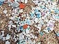 Starr-130910-0722-Cyperus laevigatus-habitat with plastic debris flotsam line-Lake-Laysan (25129444371).jpg