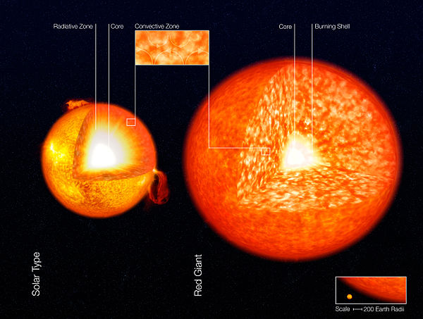 An illustration of the structure of the Sun and a red giant star, showing their convective zones. These are the granular zones in the outer layers of these stars. Structure of Stars (artist's impression).jpg