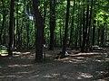 Sturbridge, MA, USA - panoramio.jpg