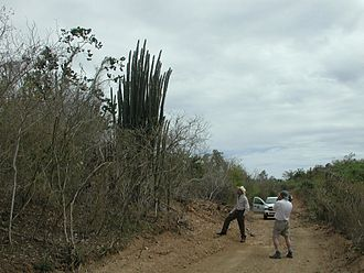 Vieques, Puerto Rico - Sub-tropical dry forest on Vieques