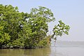 Sundarbans in the morning 1.jpg