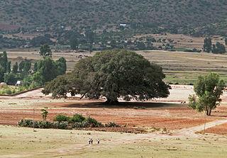 Kikuyu people ethnic group in Kenya
