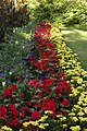 Sydney Gardens Flowerbeds.jpg