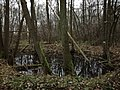 Tůň v bezzásahové části Havrany se spadanými stromy.jpg