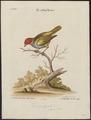 Tangara gyrola - 1700-1880 - Print - Iconographia Zoologica - Special Collections University of Amsterdam - UBA01 IZ15900325.tif