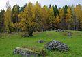 Tarhalahden ahoa Kolin kansallispuistossa Pielisen rannalla.jpg