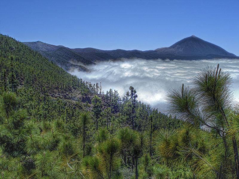 Teide 2 Blick auf.jpg