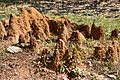 Termite Mound - Indian Institute of Technology Campus - Kharagpur - West Midnapore 2013-01-26 3678.JPG